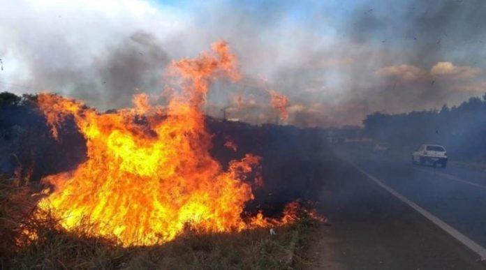Instituições criaram o site Apaga o Fogo! que tem o objetivo de detectar, na fase inicial, incêndios em áreas ambientais monitoradas remotamente